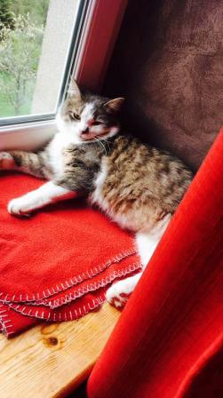 2018 05 22 alerte chat perdu a molsheim