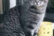 2021 08 03 alerte disparition molsheim chat femelle