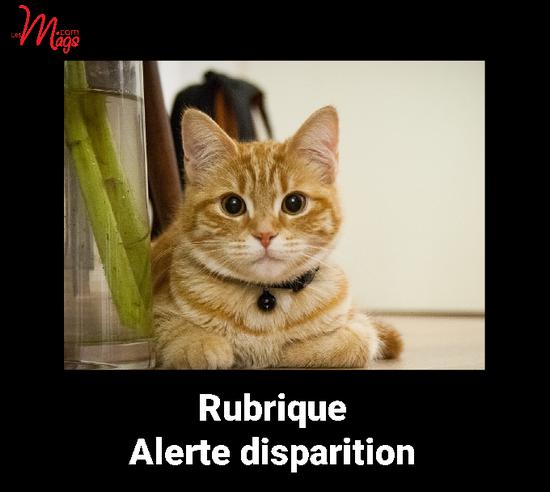 Dans cette rubrique : publiez gratuitement votre alerte disparition chat ou chien