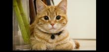 Alerte disparition chats et chiens